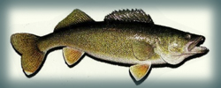 St. Croix Valley Walleye League