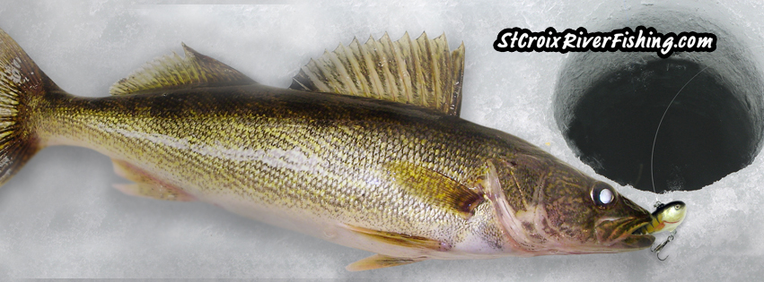St. Croix River ice fishing walleye